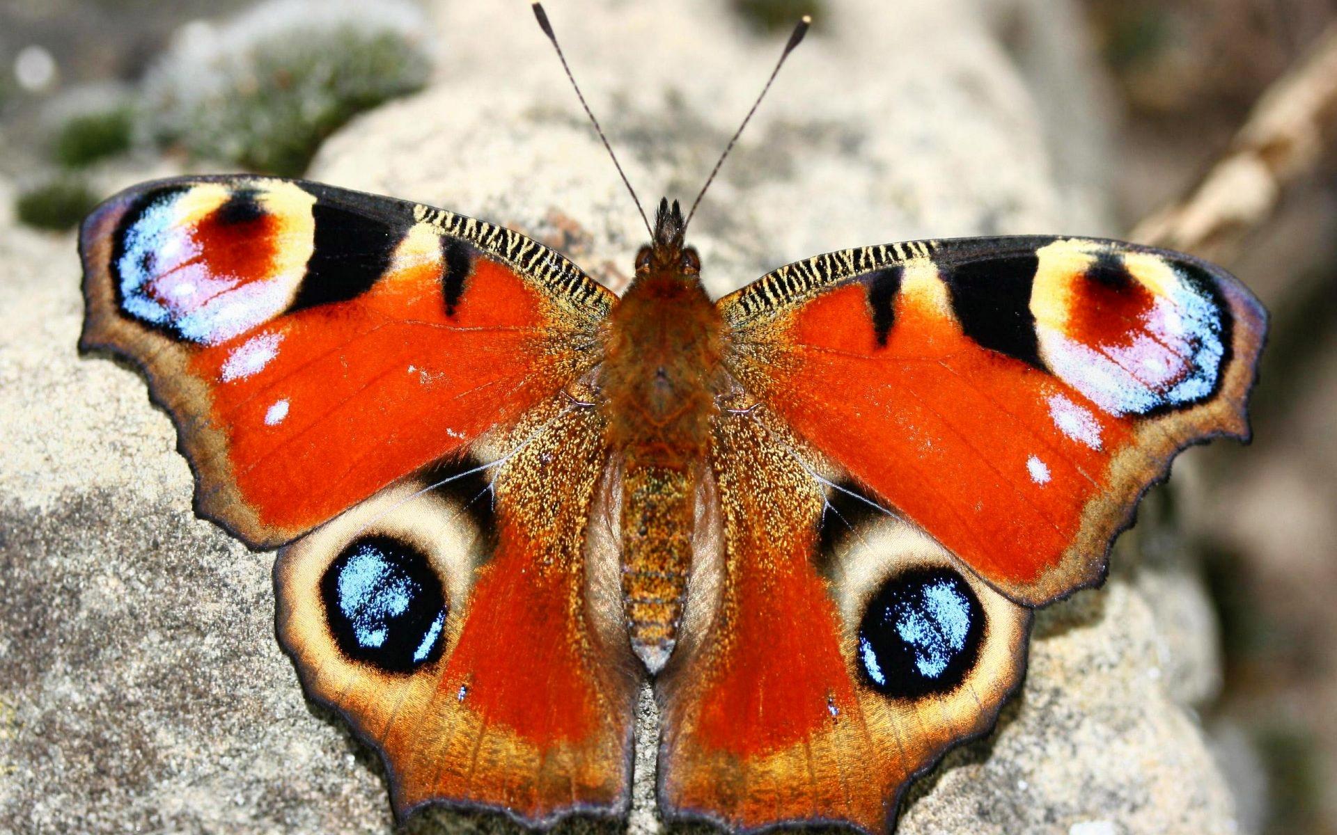 Belles images de papillons - Images de papillon ...