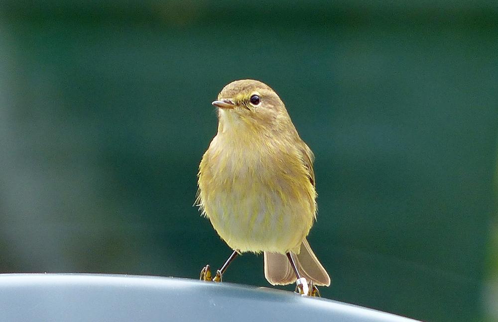 Images nature les oiseaux for Oiseaux du ciel